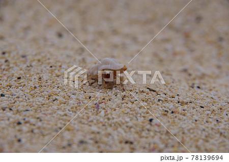 リゾートの砂浜を歩くヤドカリ 面白い貝殻 78139694