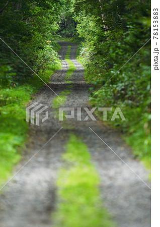 トンネルのような森の道(北海道) 78153883