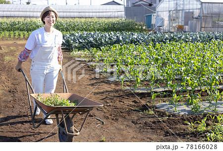 畑で働くかわいい女性 78166028