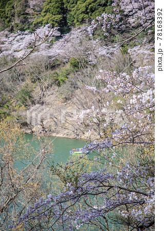 あわじの諭鶴羽ダムの桜 78168392