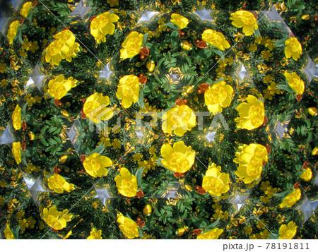 テレイドスコープで見た黄色い花 78191811
