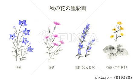 秋の花 桔梗 撫子 りんどう つわぶき 墨彩画  78193808