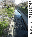 日本の川景色:奈良県大和高田市を流れる高田川及び川岸の千本桜 78198767