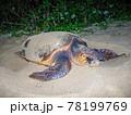 ウミガメの産卵 78199769