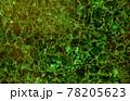 Green malachite texture. Gem stone background. 78205623