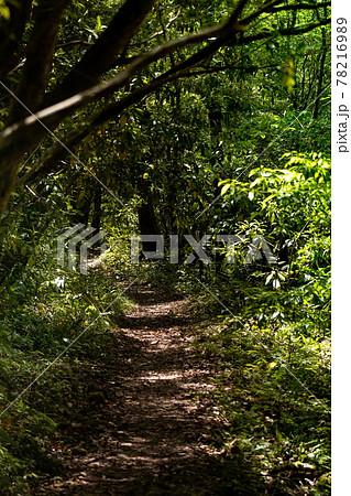 新緑の臭いを取り得ながら歩く登山道 78216989
