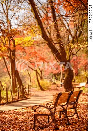 紅葉シーズンの石神井公園・ベンチ 78220235