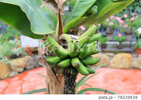 バナナの実 78220639