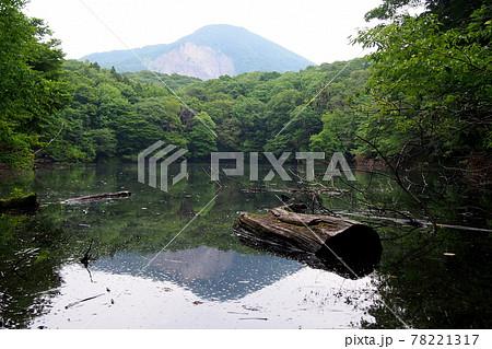【白神山地】水面に映る日本キャニオン 78221317