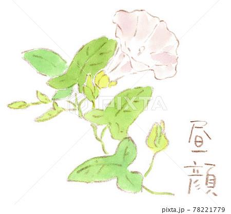 初夏の草花:沿道に咲くヒルガオの水彩イラスト 78221779