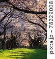 夕方の雫石川園地で桜を見る 78229008