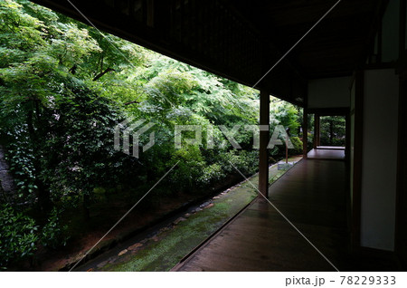 初夏の龍安寺 方丈にある静かな北庭 78229333