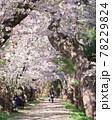 弘前公園のさくらと花筏 78229824