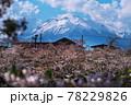 弘前公園のさくらと花筏 78229826