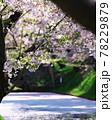 弘前公園のさくらと花筏 78229879