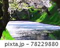 弘前公園のさくらと花筏 78229880