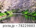 弘前公園のさくらと花筏 78229883