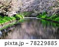 弘前公園のさくらと花筏 78229885