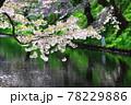 弘前公園のさくらと花筏 78229886