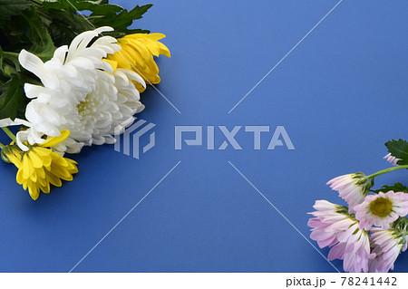 菊の花 仏花 78241442
