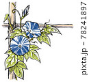 竹垣に伝う二輪の青色の斑入り朝顔の花と蕾 版画風 78241897