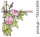 竹垣に伝う二輪の赤紫色の斑入り朝顔の花と蕾 版画風 78241899
