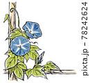 竹垣に伝う二輪の青色の朝顔の花と蕾 版画風 78242624