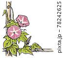 竹垣に伝う二輪の赤紫色の朝顔の花と蕾 手描き・マット塗り 78242625