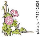 竹垣に伝う二輪の赤紫色の朝顔の花と蕾 版画風 78242626