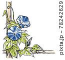 竹垣に伝う二輪の青色の斑入り朝顔の花と蕾 版画風 78242629