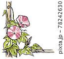 竹垣に伝う二輪の赤紫色の斑入り朝顔の花と蕾 手描き・マット塗り 78242630