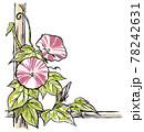 竹垣に伝う二輪の赤紫色の斑入り朝顔の花と蕾 版画風 78242631