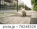 路地裏に座る白猫 78246326