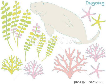 さんご礁の海を泳ぐジュゴン 78247920