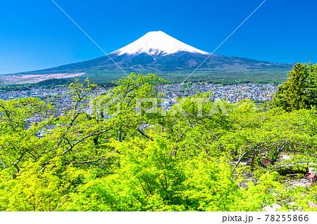 《山梨県》富士山と新緑・新倉山浅間公園 78255866