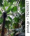 世界自然遺産の小笠原諸島 東京で味わえるジャングル感 78260657