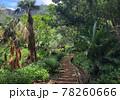 世界自然遺産の小笠原諸島 父島のトレッキング中にて見える景色 78260666