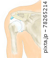 肩関節前方 靭帯、関節包 78265214