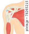 肩関節 前方 腱板 78265215