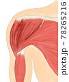 肩関節 前方 筋肉 78265216