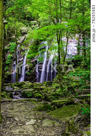 京都府・金引の滝 78265883