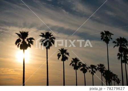 大村市森園公園の夕日と雰囲気のある木々 78279627
