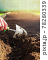 Small garden shovel in woman's hand. Close-up. 78280339
