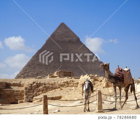 【世界遺産】エジプトのピラミッドと砂漠で歩くラクダと馬 78286680