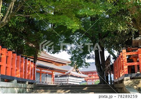 八坂神社、国宝本殿と重文舞殿に夏の緑 78289259