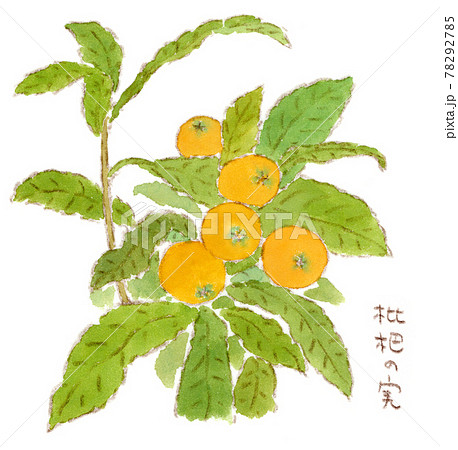 初夏の果物:枝に生っている枇杷(ビワ)の水彩イラスト 78292785