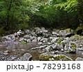 日本の渓流釣り、熊本県の阿蘇山から流れ出る菊池川源流域での渓流釣り、 78293168