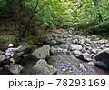 日本の渓流釣り、熊本県の阿蘇山から流れ出る菊池川源流域での渓流釣り、 78293169