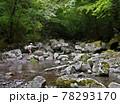 日本の渓流釣り、熊本県の阿蘇山から流れ出る菊池川源流域での渓流釣り、 78293170