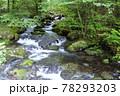 日本の渓流、熊本県の阿蘇山から流れ出る菊池川源流域の風景 78293203